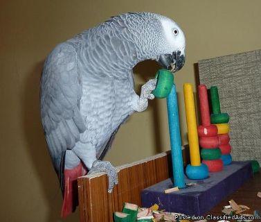 Parrots and Fertile Hatching Parrot eggs for sale