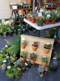 Lower than retail variety of succulents and drought tolerant plants