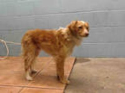 Adopt DORITO a Tan/Yellow/Fawn Terrier (Unknown Type, Medium) / Mixed dog in
