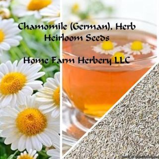 Get a FREE gift when you Order Chamomile (German), Herb Heirloom Seeds now!