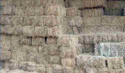 Excelent quality Horse Hay