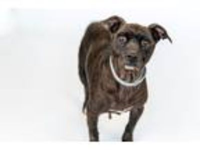 Adopt TINA a Terrier (Unknown Type, Small) / Mixed dog in Redwood City