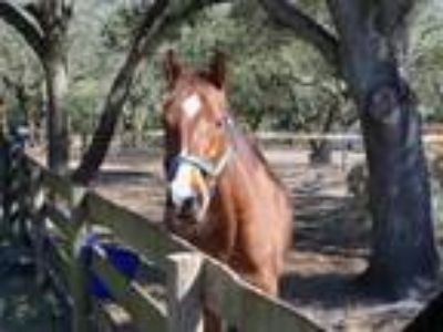 Adopt Mambo Appeal a Thoroughbred