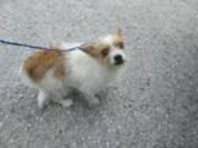 Adopt 41842630 - Available 6/7 a Terrier