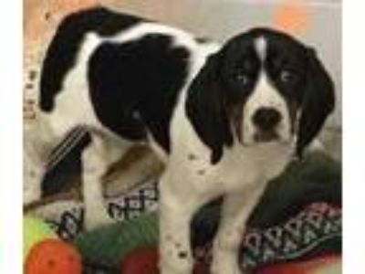 Adopt Lucy Lou a Black Hound (Unknown Type) / Mixed dog in Wellsville
