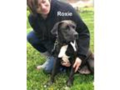 Adopt Roxie a Mixed Breed