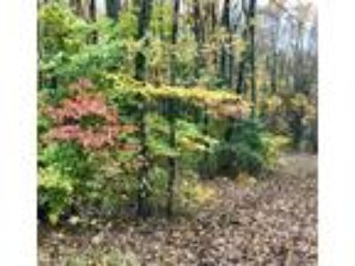 3 Wooded Lots Listed Together-Only 10% Down or Will Sell Individual- Call Dave