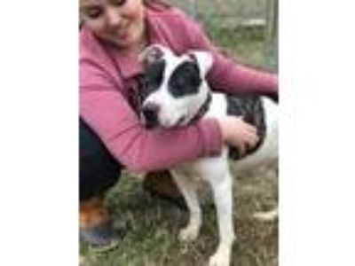 Adopt Magnolia - READY NOW! a Pit Bull Terrier