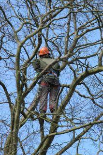 Suburban Tree Service