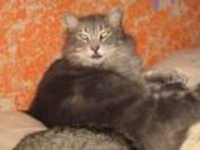 Adopt Zane Gray a Domestic Medium Hair