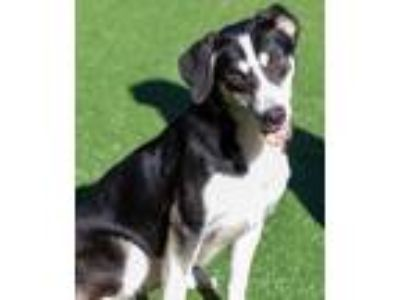Adopt Reba a Black Mixed Breed (Large) / Mixed dog in Cartersville