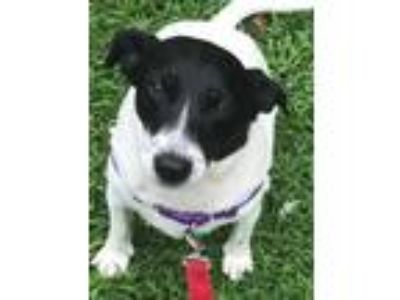 Animals and Pets for Adoption Classifieds in Saratoga