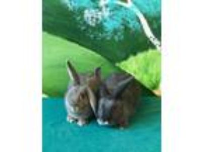 Adopt Magnolia and Rosemary a American
