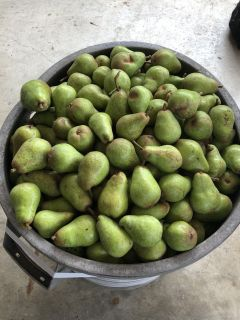 50 lbs of pears left