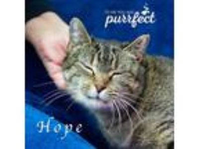 Adopt Hope a Domestic Shorthair / Mixed cat in Mooresville, NC (21288015)