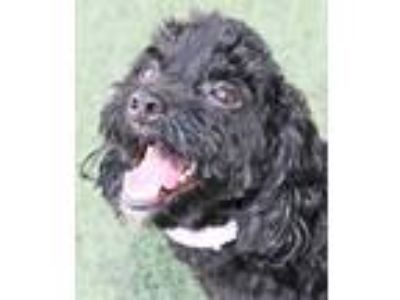 Adopt Rubisco a Black Mixed Breed (Small) / Mixed dog in Fernandina Beach