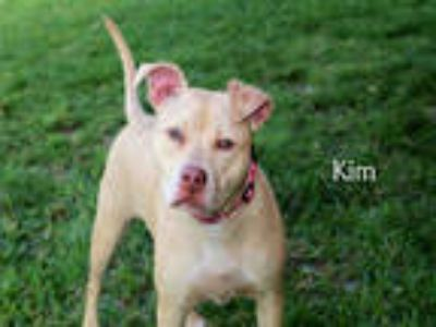 Adopt KIM a Brown/Chocolate American Pit Bull Terrier / Mixed dog in Fort Myers
