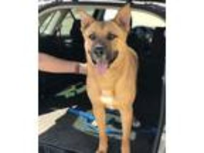Adopt Diesel a German Shepherd Dog / Mixed dog in Downey, CA (25532482)
