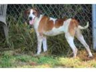 Adopt Eric Forman a Hound (Unknown Type) / Mixed dog in Alexandria