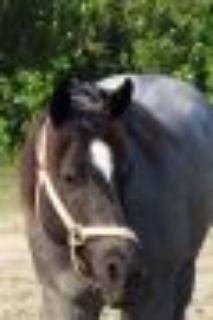 Marguerita Quarterhorse Horse