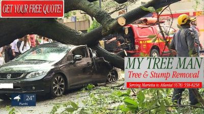 Tree & Stump Removal (678)558-8258 web// www.mytreeman.com
