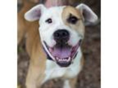Adopt Yoshie a Terrier (Unknown Type, Medium) / Mixed dog in Atlanta