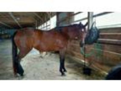 Adopt Grace a Thoroughbred