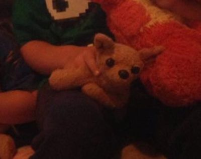 Lost beloved stuffed brown chihuahua
