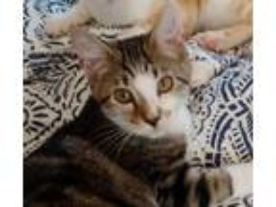 Kittens - Milford, Ohio Classified Ads - Claz org