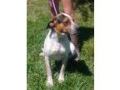 Adopt Jerry a Cattle Dog, Hound