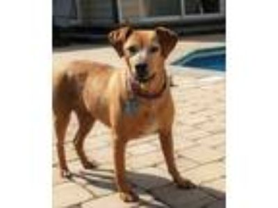 Adopt Angie & Maybell a Yellow Labrador Retriever