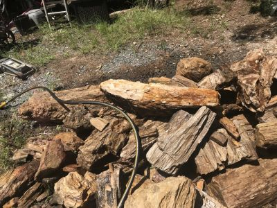 lots of Petrefied wood for sale