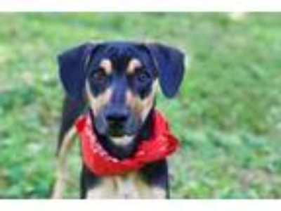 Adopt Marty a Mixed Breed