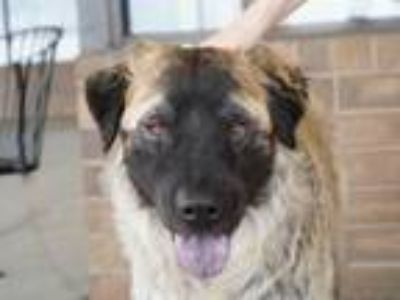 Adopt Wooly a Mixed Breed