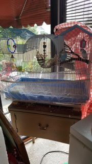 2 parakeets, cage,lots of toys, food