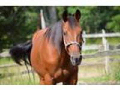 Adopt Fire With Courage (adv.beg. riding/driving- free if approved) a