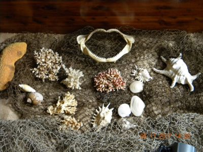 Aquarium Decor.....Coral, Shells, and 2 Nets