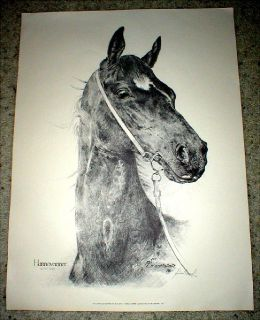 "Horse Print - ""Hannoveraner"" - Signed & Numbered - Limited Ed"