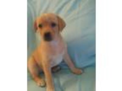 Puppy - Janesville Classifieds - Claz org