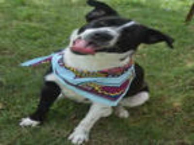Adopt LINZ a Black - with White Border Collie / Mixed dog in Texas City