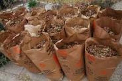 WANTED YOUR BAGGED LEAVES GRASS OR OTHER COMPOST MATERIAL GARDEN MULCH (SAN MARCOS)