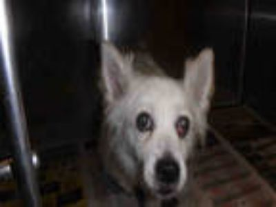 Adopt FLUFFY a White Mixed Breed (Medium) / Mixed dog in Van Nuys, CA (25915479)