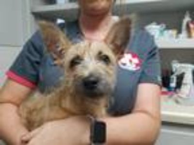 Adopt Sofia CJ in AR a Terrier