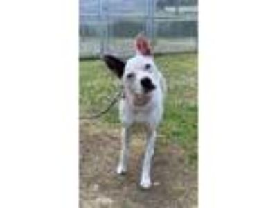 Adopt Loosey-Goosey a Mixed Breed