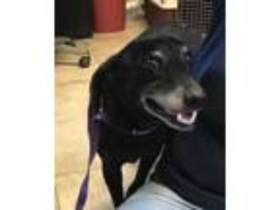 Adopt Buster a Black Mixed Breed (Medium) / Mixed dog in St.