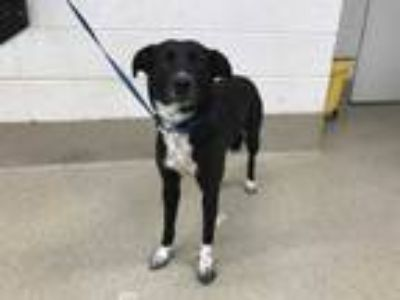 Adopt ADOPTED Lilly a Black Retriever (Unknown Type) / Mixed dog in Fort Worth