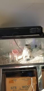 AQUARIUM AND STAND AND ITEMS INSIDE