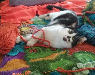 Black and white cat/kitten