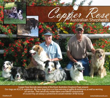 Craigslist - Dogs for Sale or Adoption Classified Ads in ...