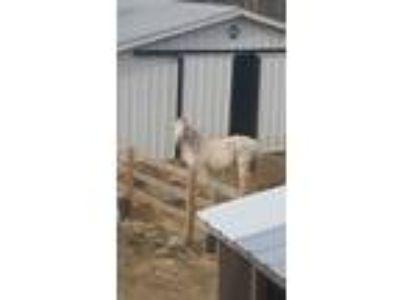 Adopt Falcor a Arabian